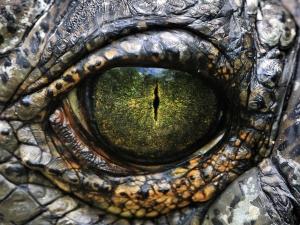 reptle-eye.jpg