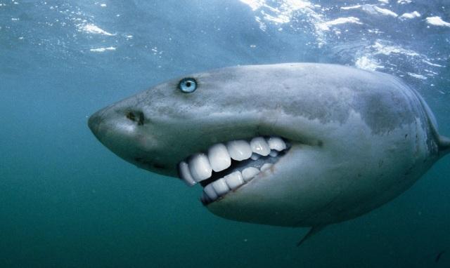 Shark Smile 2