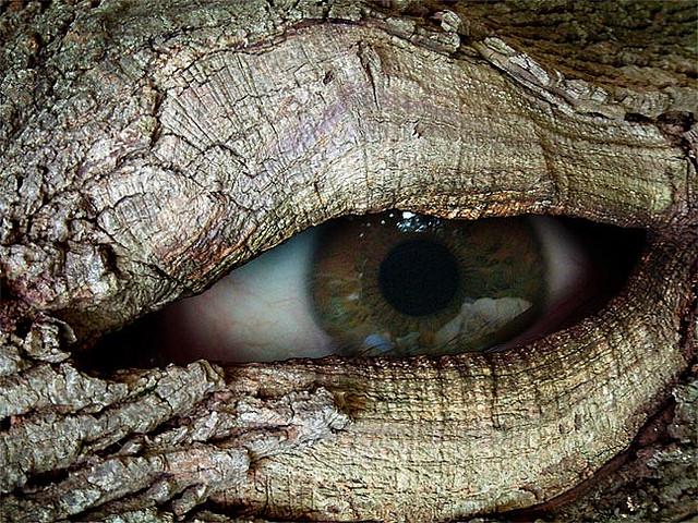 Ent Eye